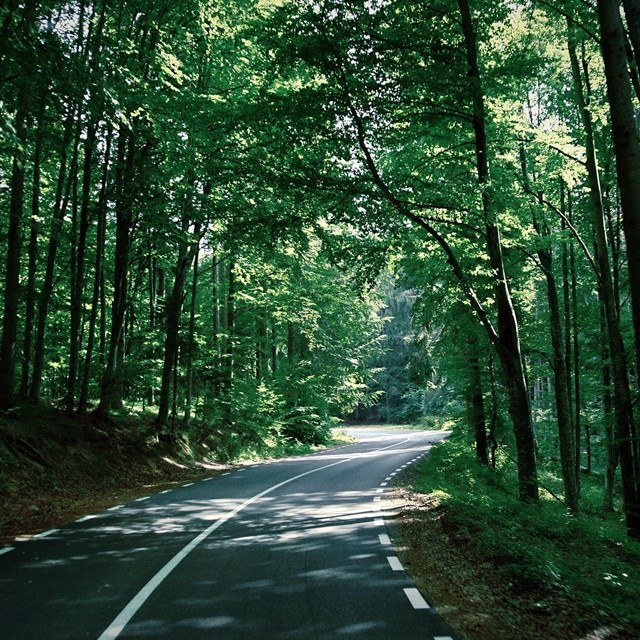 Road through forrest - sustainability
